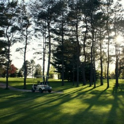 Trees on Sunnybrae golf course
